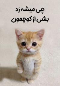 گربه شرک